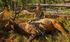 Do You Know These Facts About Elk?