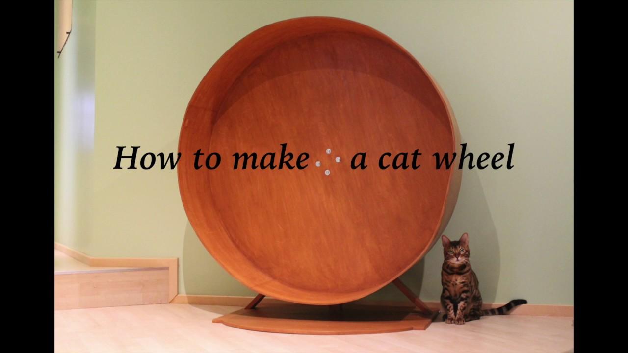 Gives Cats Mental Stimulation